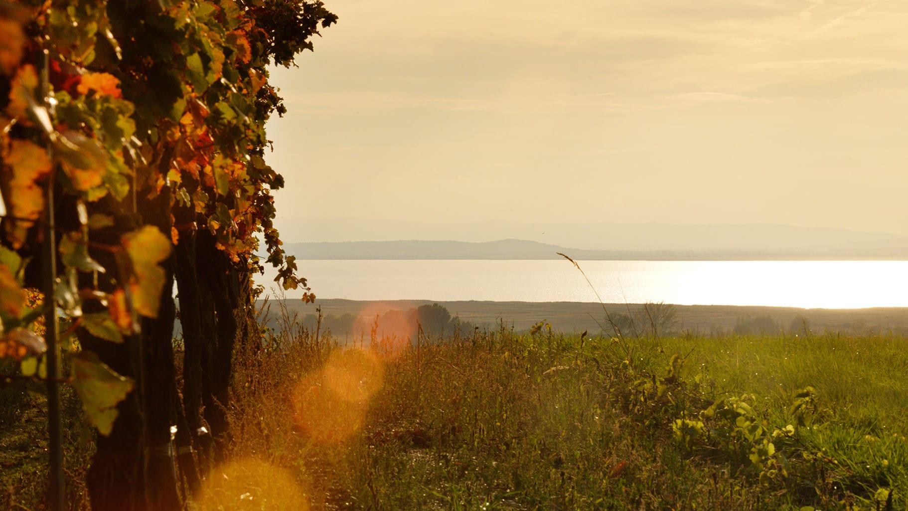 """Featured image for """"Der See, das Salz & der Wein"""""""
